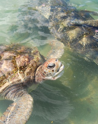 Delight at progress made in turtle talks