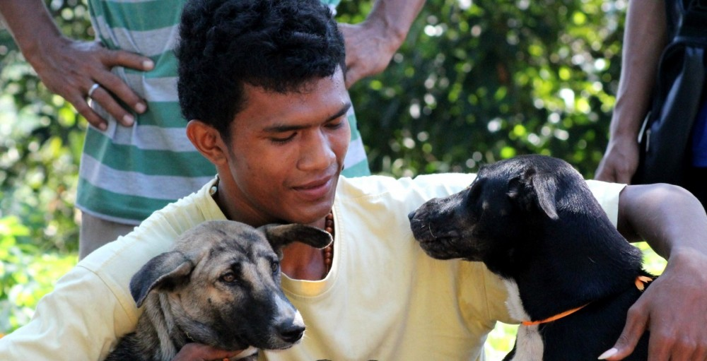 Man and dogs in Bali