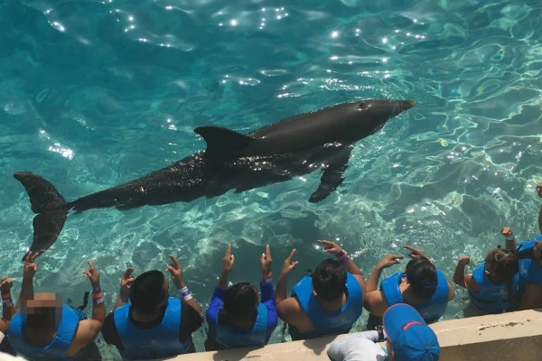 Dolphins in captivity performing - World Animal Protection - Animals in the wild