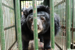A bear in a cage during a rescue.