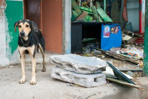 Dog surrounded by debris outside his home in Ecuador