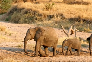 A family of elephants in Tarangire National Park, Tanzania