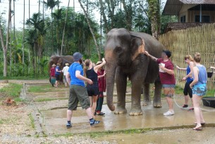 An elephant being washed by a group of tourists and a mahout. Behind another station is visible, where the same thing is happening to another elephant.