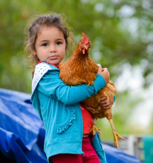 The inner lives of chickens: intelligence, self-control and empathy