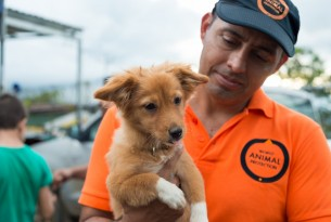 Gifts that Give Back to Animals