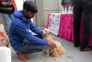 animals in communities, holi, stray dogs, vaccination, dogs, rabies, antirabies vaccination