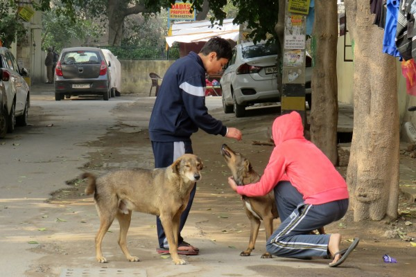 dogs, animals in communities, holi, stray dogs
