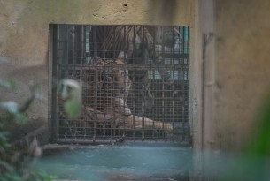 Keeping Wild Animals in Captivity Is Not Conservation. Here's Why.
