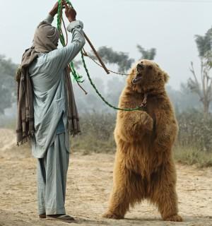 Bear dancing in Pakistan