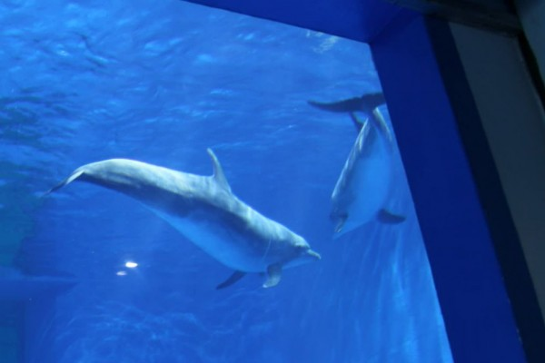 A dolphin tank at an entertainment park in China - dolphins in captivity - World Animal Protection
