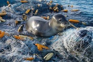 Seal tangled in abandoned ghost gear