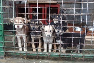Puppies at a shelter in Brasov, Romania