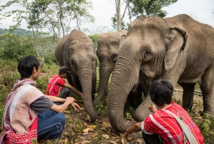 There are no winners in the elephant tourism industry