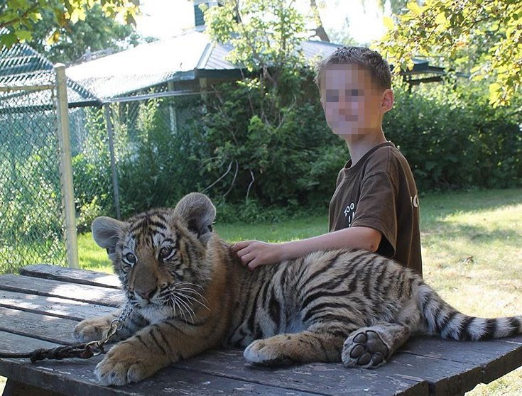 A young boy posing with a tiger at Jungle Cat World in Canada