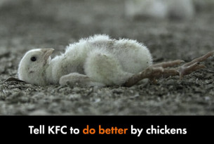 Tell KFC to do better by chickens.