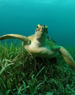 healthy sea turtle