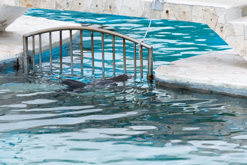 Captive dolphins in Mexico