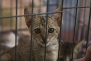 Cat at cat shelter in Indonesia after earthquake - World Animal Protection - Animals in disasters