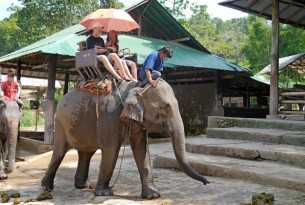 The cruelty behind elephant rides