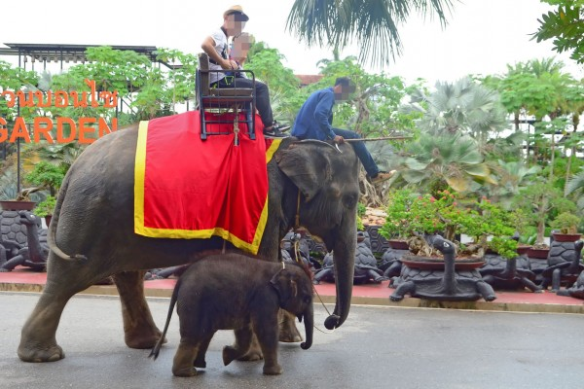 Baby elephant in a low welfare venue