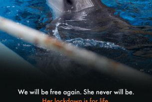 Dolphin in small tank behind rusty bars - World Animal Protection
