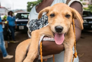 dog, puppy, animals in communities, sierra leone, africa