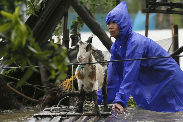A resident reinforces his flooded home at the height of Super Typhoon Haima which lashes Narvacan township, Ilocos Sur province, Philippines - World Animal Protection