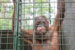 7 animal cruelty facts and what you can do to change the statistics