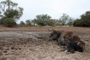 Aiding over 28,000 animals after severe floods cause famine in Bolivia