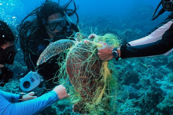 Turtle being rescued from ghost gear