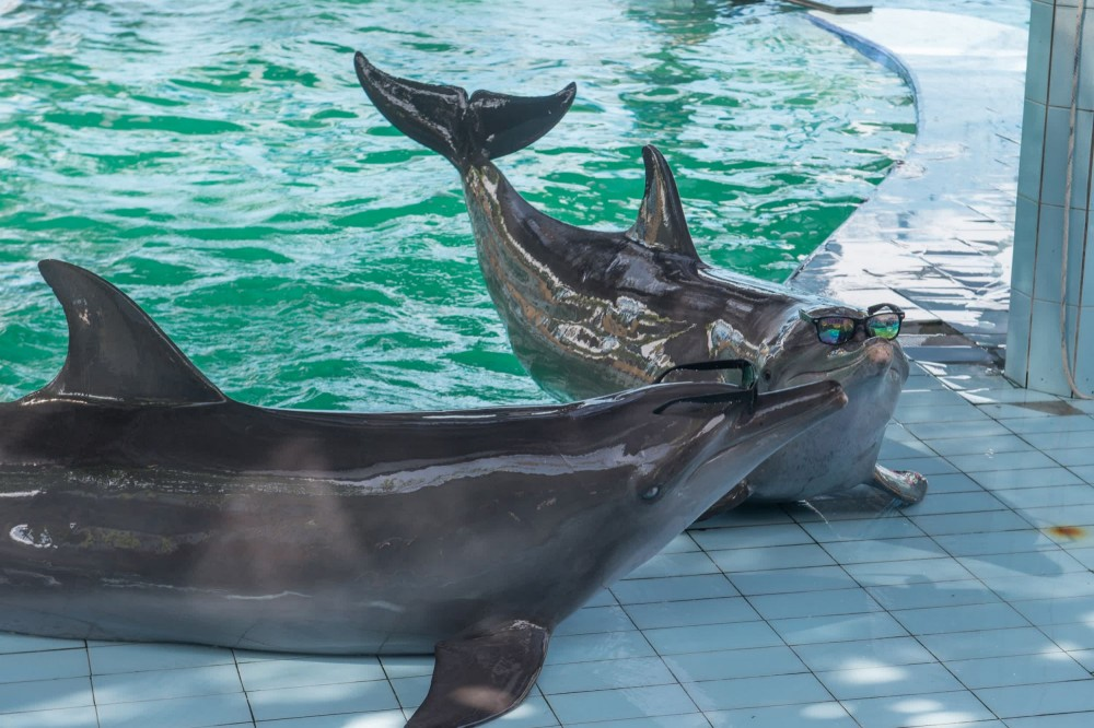 Dolphin performing at tourist attraction - World Animal Protection - Wildlife. Not entertainers