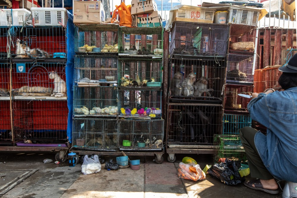 Cages multiple animals and trader Jatinegara Jakarta