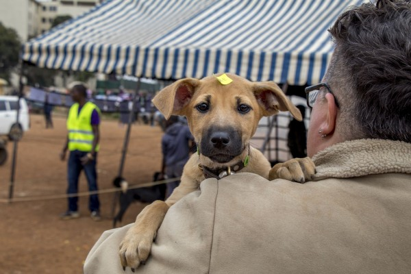 A puppy takes a peek beyond a safe shoulder at the vaccination clinic, Nairobi
