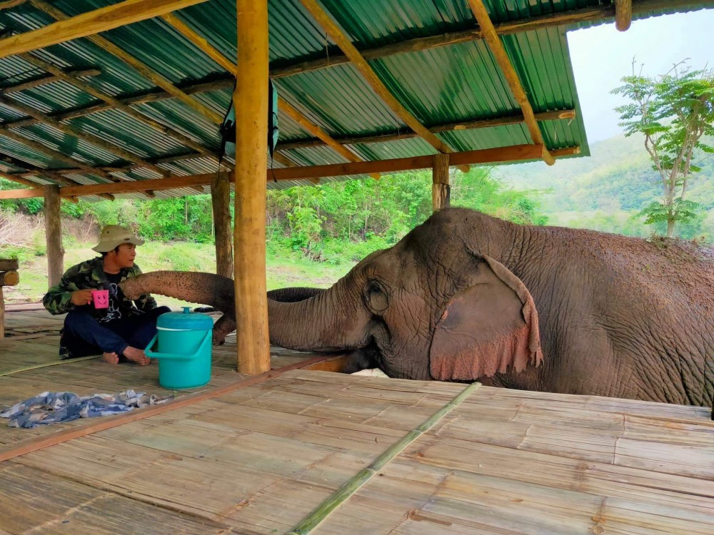 Mae Kam and Mae Dok asking head mahout Aner for HIS fruit lunch