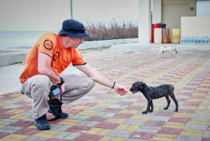 Steven Clegg, disaster response manager for World Animal Protection reaches out to a puppy