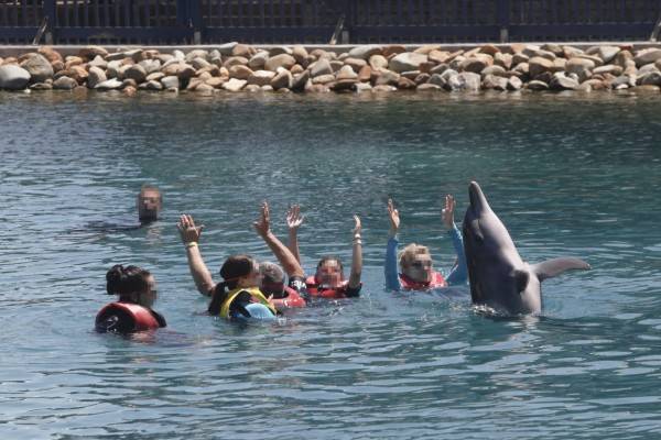 Dolphin in captivity - World Animal Protection - Wildlife. Not entertainers