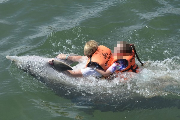 10 year-old girl attacked by dolphins - the dangers of wild animal interactions