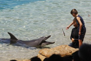 Children feeding a captive dolphin