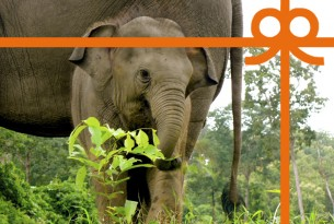 eCard: Give elephants freedom