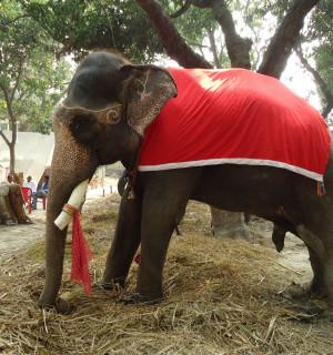 Sonepur , Sec 40, Animals in the wild
