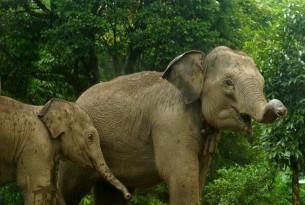 Elefanter i et af de reservater, vi giver ekstra st?tte under coronakrisen