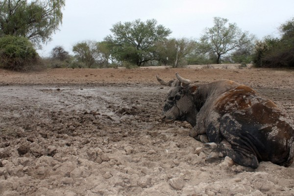 Aiding Over 28 000 Animals After Severe Floods Cause Famine In Bolivia World Animal Protection