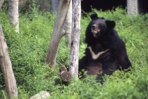 A step closer to ending the cruel bear bile industry in Vietnam