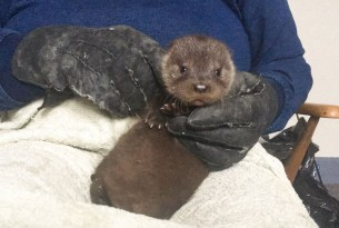 Grant: a rescue story with an otterly happy ending