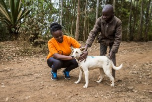 Vaccinating against rabies in four African countries