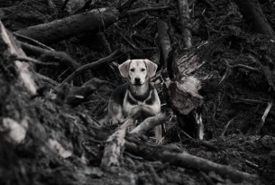 Stray dog in ruins after disaster