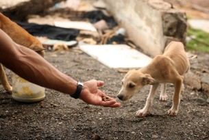 Protecting animals in disasters