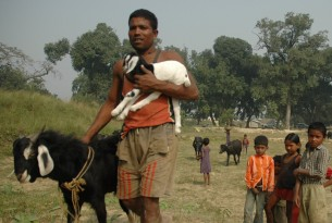A local man brings his animals to the drill in Bihar, India