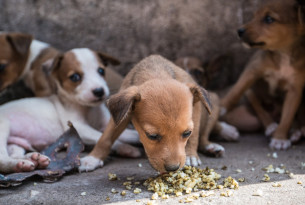 Puppies in Sierra Leone