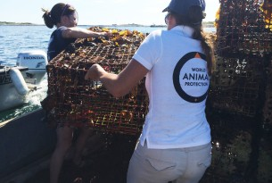 Joint ghost fishing gear removal expedition in New Hampshire